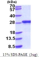 AR51878PU-N - Apolipoprotein A I / APO AI