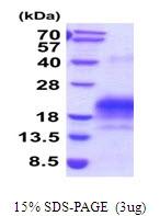 AR51924PU-N - CDw293 / BMPR1B
