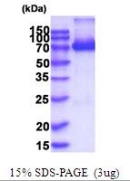 AR51927PU-N - XPNPEP1