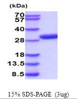 AR51929PU-N - Latexin