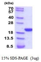AR51949PU-N - Cyclophilin F