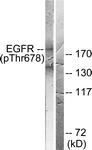 A0008-1 - EGFR / ERBB1