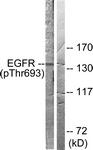 A0009-1 - EGFR / ERBB1