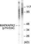 A0018-1 - MAPKAP Kinase-2