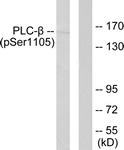 A0078-1 - PLCB3