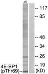 A0402-1 - EIF4EBP1 / 4E-BP1