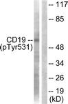 A0412-1 - CD19