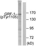 A0433-1 - GRLF1 / GRF1