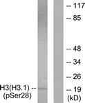 A0435-2 - Histone H3.1