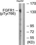 A0480-1 - FGFR1