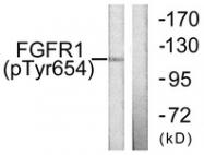 A0481-1 - FGFR1