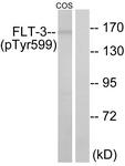 A0482-1 - CD135 / FLT3