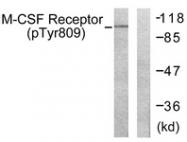 A0507-1 - CD115