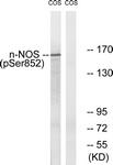 A0527-1 - NOS1