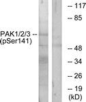 A0541-1 - PAK1