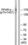 A0556-1 - MED1