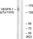 A0594-1 - VEGFR-1 / Flt-1