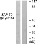A0601-1 - ZAP70