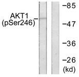 A0608-1 - AKT1 / PKB