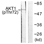 A0610-1 - AKT1 / PKB