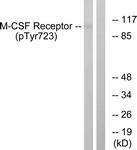 A0679-1 - CD115