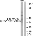 A0799-1 - MAP kinase p38 alpha / MAPK14