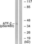A0819-1 - ATF2