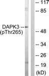 A0900-1 - DAPK3 / ZIPK