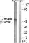 A0904-1 - Dematin