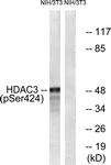 A0939-1 - HDAC3