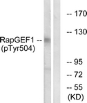 A1120-1 - RAPGEF1 / GRF2