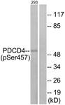 A1175-1 - PDCD4