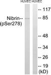A1221-1 - Nibrin
