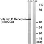 A1245-1 - Vitamin D3 receptor / NR1I1