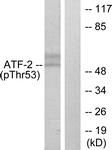 A7015-1 - ATF2