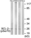 A7025-1 - Bcl-2