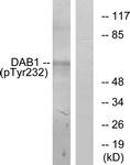 A7055-1 - DAB1