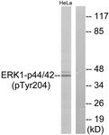 A7074-1 - MAPK3 / ERK1