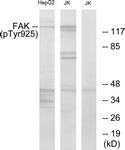 A7083-1 - FAK1 / PTK2