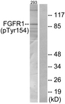 A7084-1 - FGFR1
