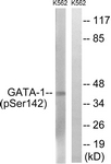 A7092-1 - GATA1