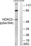 A7099-1 - HDAC2