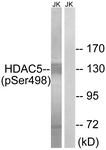A7101-1 - HDAC5