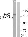 A7127-1 - Tyrosine-protein kinase JAK2