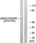A7128-1 - MAPK8 / JNK1