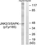 A7129-1 - MAPK8 / JNK1