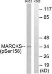 A7142-1 - MARCKS