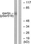 A7150-1 - Merlin