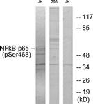 A7170-1 - RELA / NF-kB p65