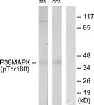 A7178-1 - MAP kinase p38 alpha / MAPK14